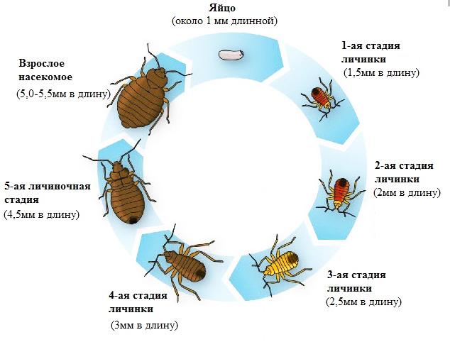 виды паразитов живущих человеке