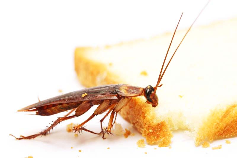 Тараканы черные домашние как избавиться